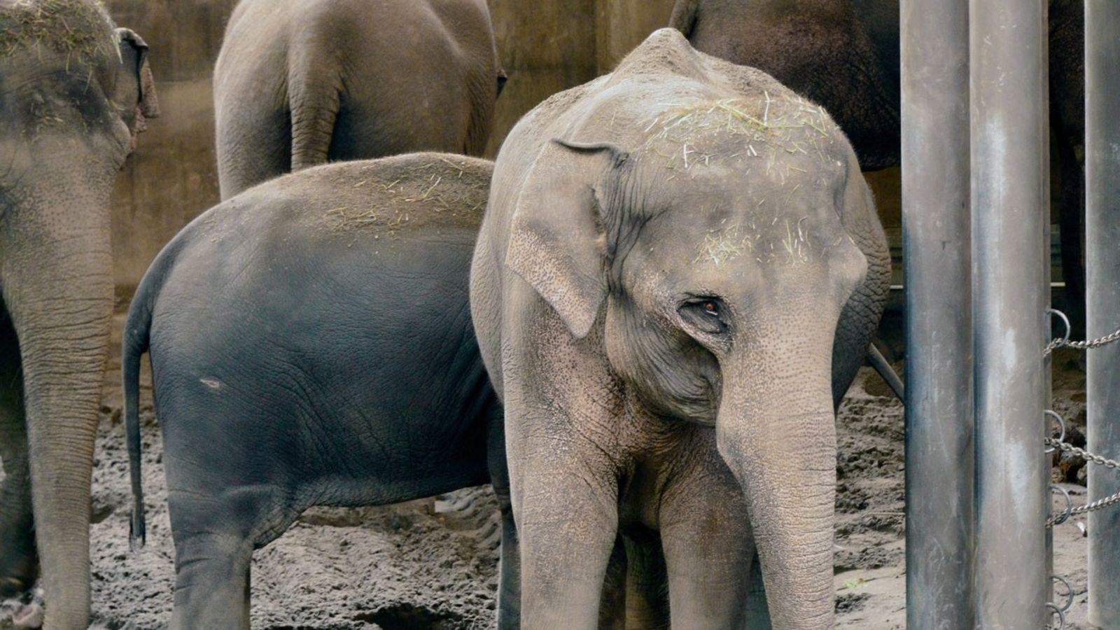 Três em cada quatro doenças infecciosas novas ou emergentes manifestadas em pessoas são transmitidas por animais, ...