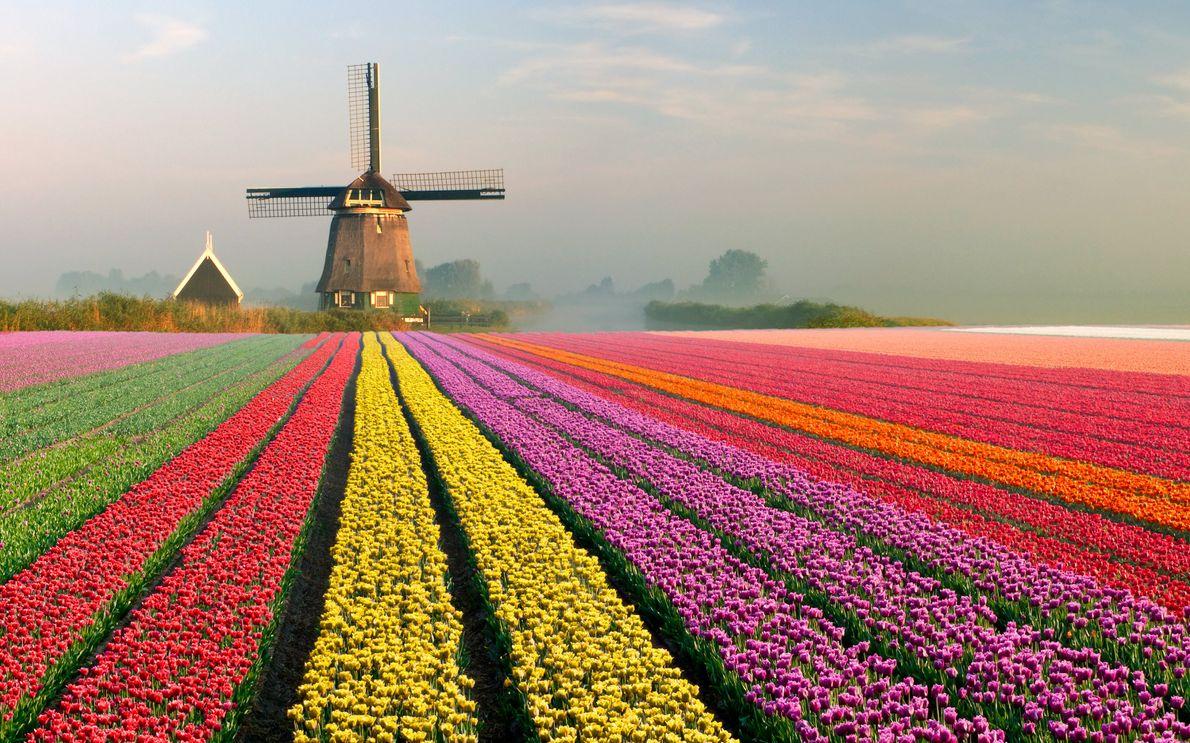 aro-iris-tulipas-holanda