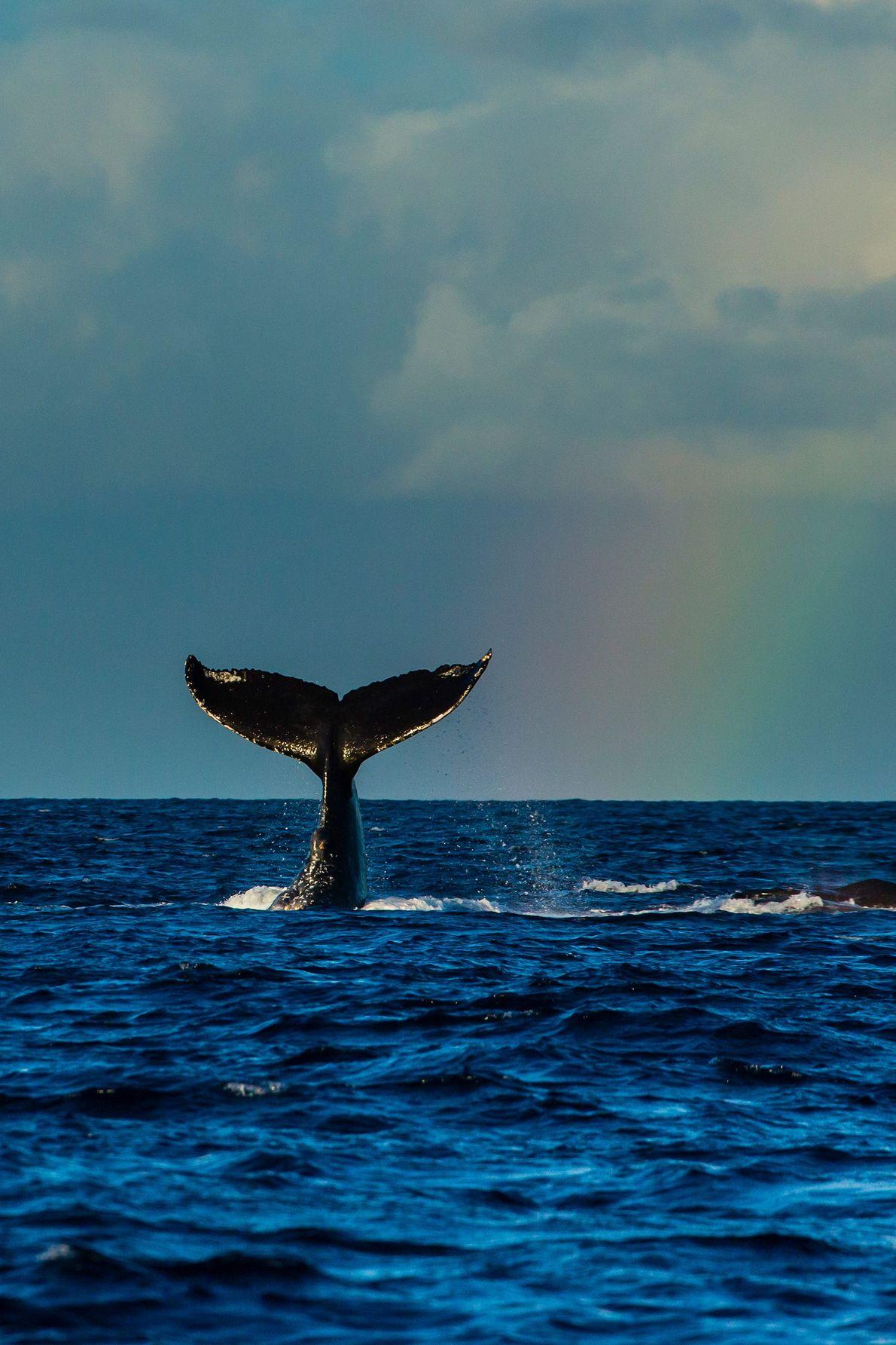 Hawaiian Islands Humpback Whale National Marine Sanctuary, Hawaii