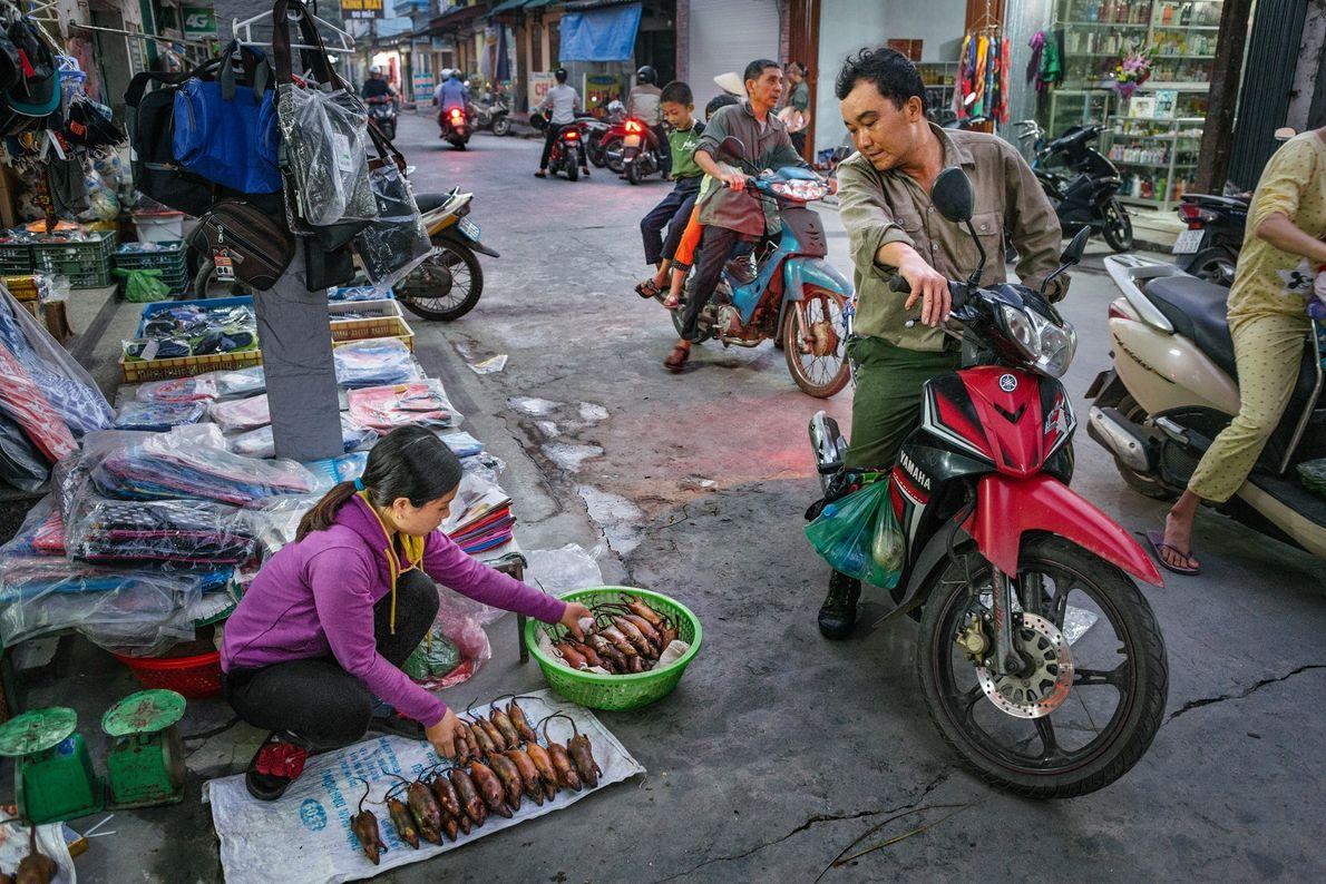 Vendedora de rua mostra os ratos à venda em Co Dung.