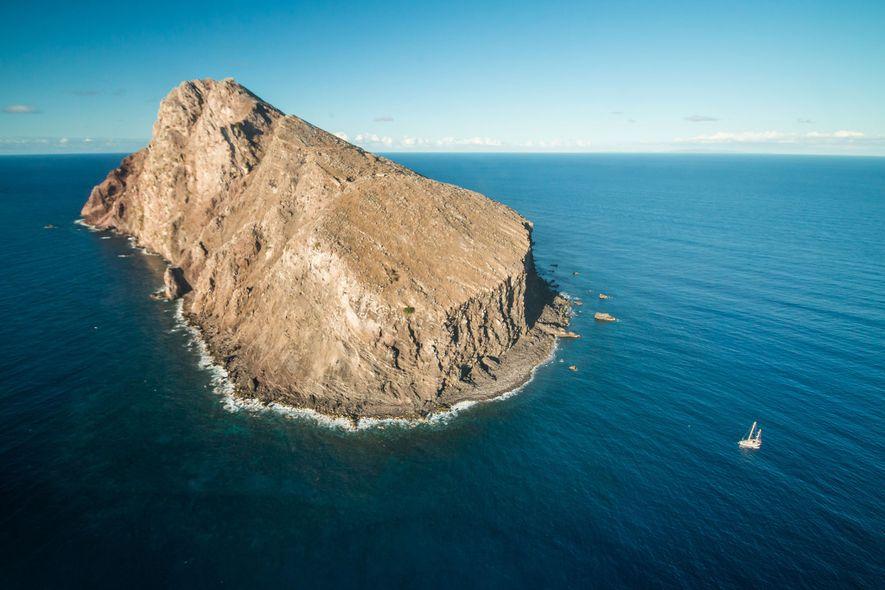Cabras selvagens dominaram ilha por mais de um século. Agora, o local está renascendo