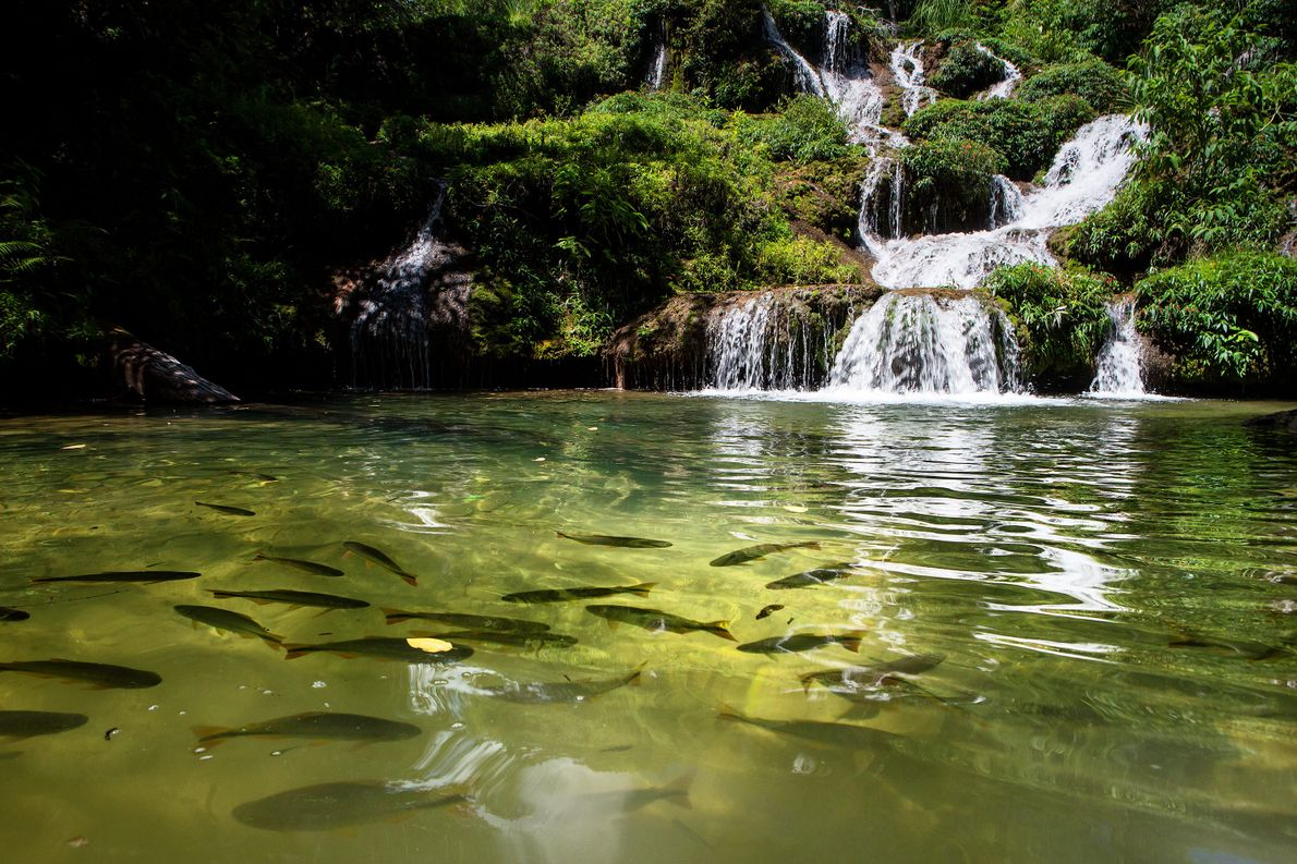 The Rio de Peixe is one of many places to spot fish and waterfalls in Mato ...