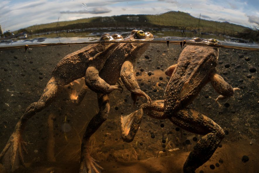 Fotos: O negligenciado mundo dos animais de água doce