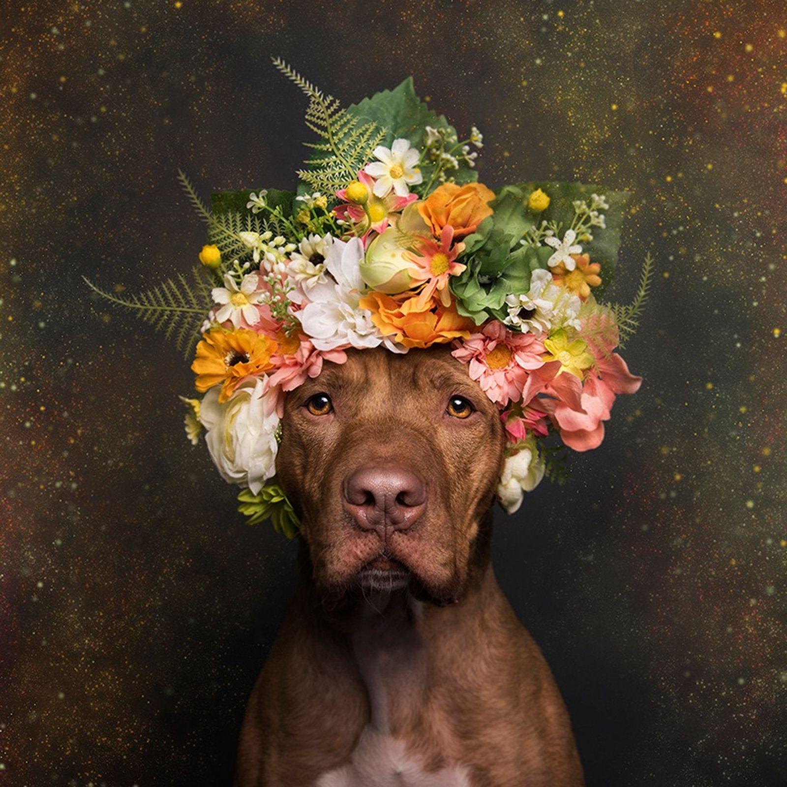 rodger-pitbull-com-coroa-de-flores