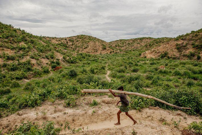 Garoto rohingya leva nas costas um tronco da floresta de volta ao campo. O corte de ...
