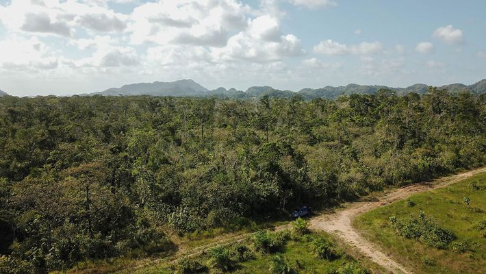 A Guatemala, outrora considerada o pulmão da América Central, perdeu 17% de suas florestas entre 2001 ...