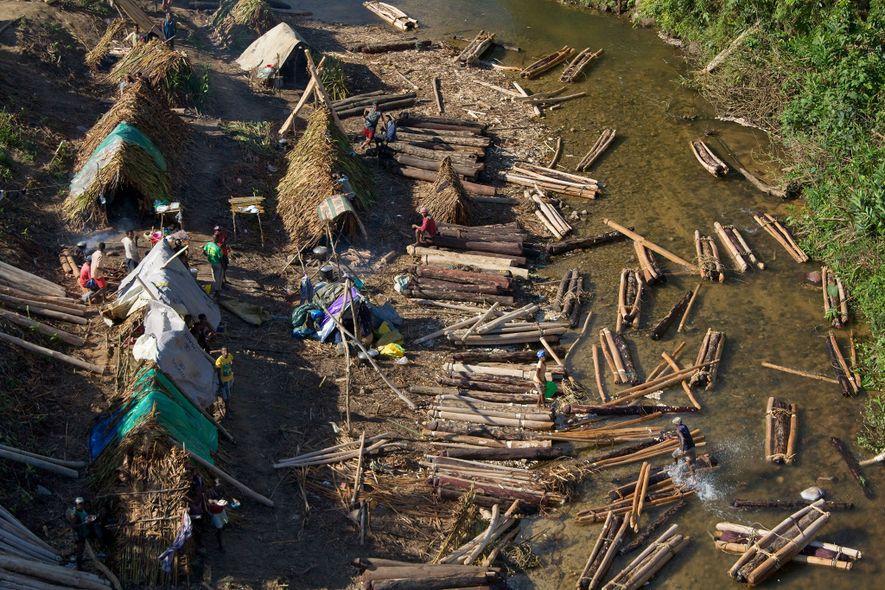 Em um campo de extração de madeira, toras de jacarandá são agrupadas e lançadas rio abaixo. Como o jacarandá guatemalteco cresce cerca de um centímetro por ano e pode levar até um século para chegar à maturidade, a extração ilegal pode devastar populações.