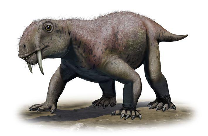 Esta ilustração mostra o protomamífero Tiarajudens eccentricus, o mais antigo animal com dentes de sabre conhecido, ...