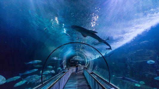 10 maneiras de ver o mundo através de uma bolha de vidro