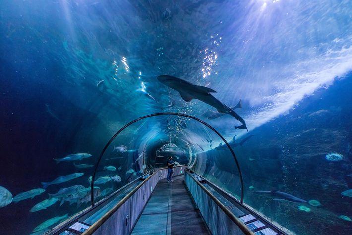 Dois túneis subaquáticos, com um total de 90 metros de extensão, são as atrações principais do ...