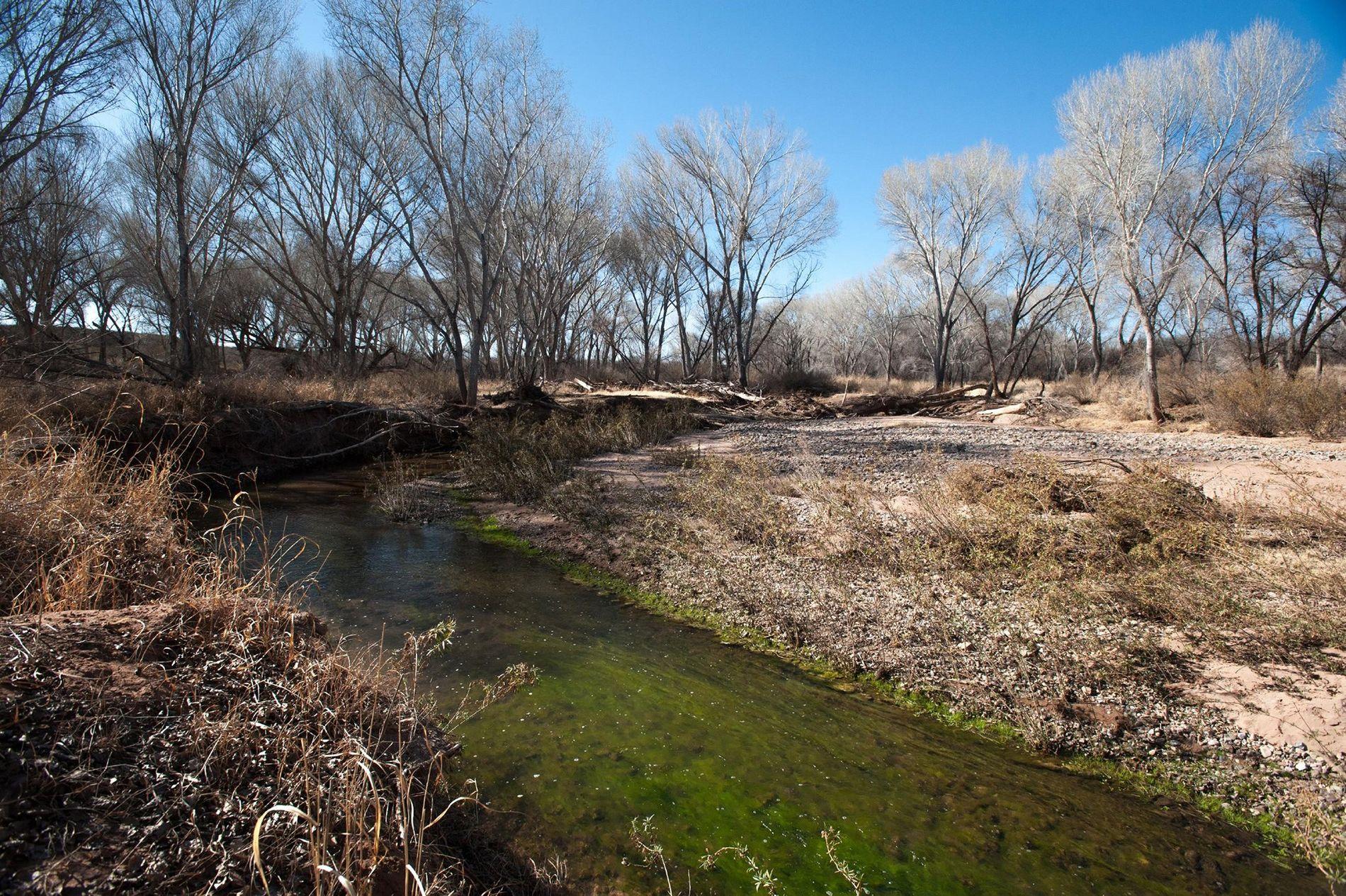 O rio San Pedro, no estado do Arizona, teve sua vazão reduzida nas últimas décadas devido ...