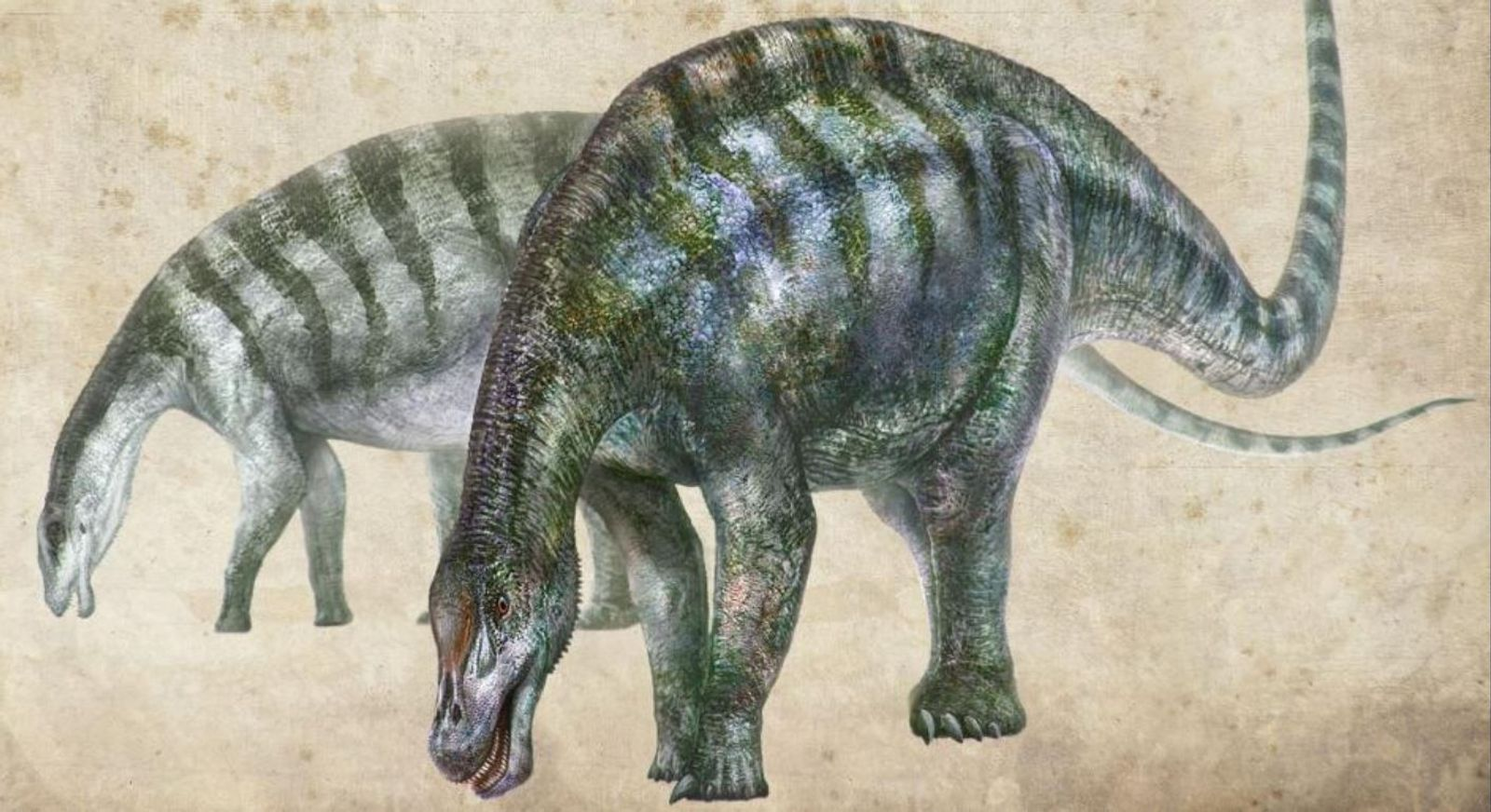 """Fóssil de """"dragão"""" chinês reconfigura origem dos maiores dinossauros do mundo"""