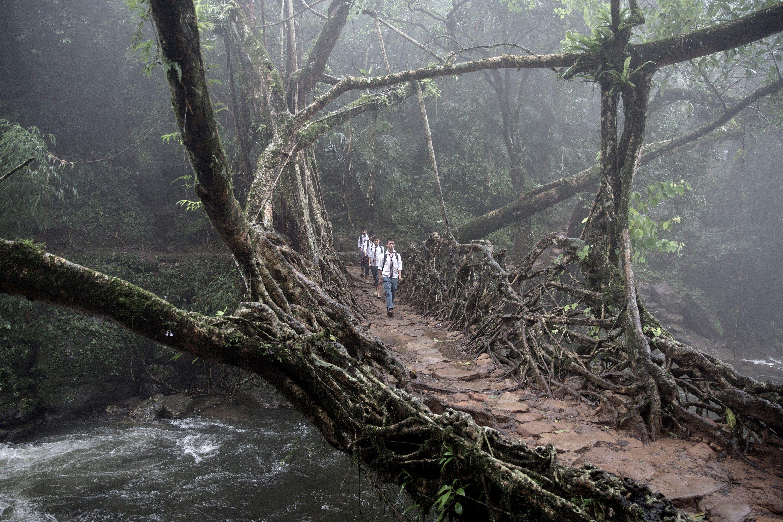 Fotos surreais das pontes de raízes vivas da Índia | National Geographic