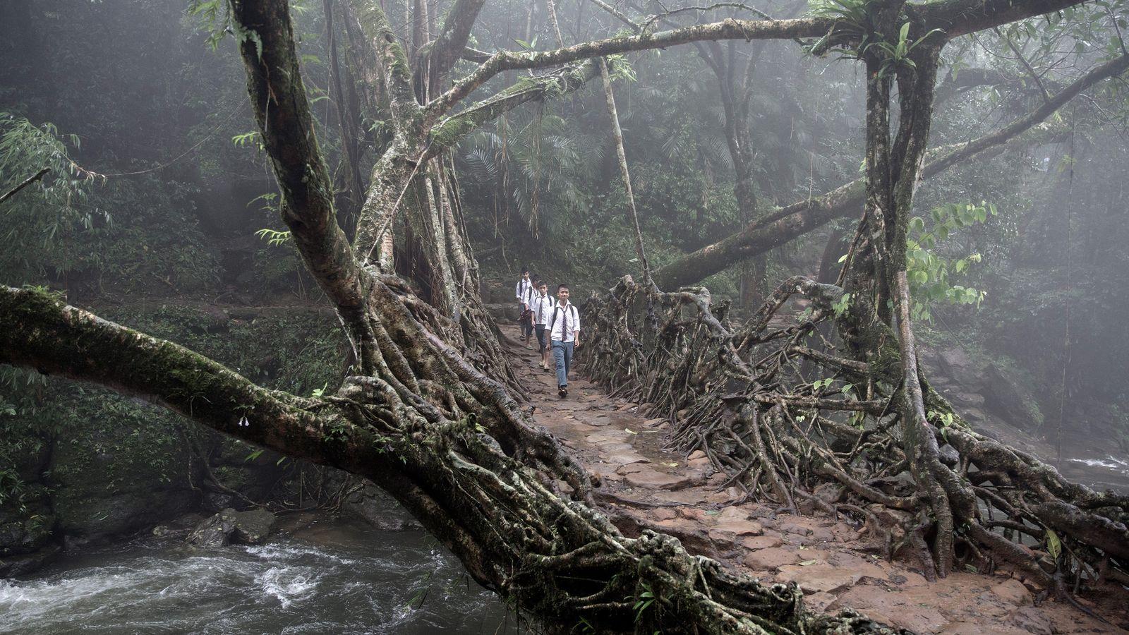 criancas-vao-para-a-escola-pontes-de-raizes-vivas-india