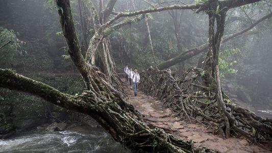 Fotos surreais das pontes de raízes vivas da Índia