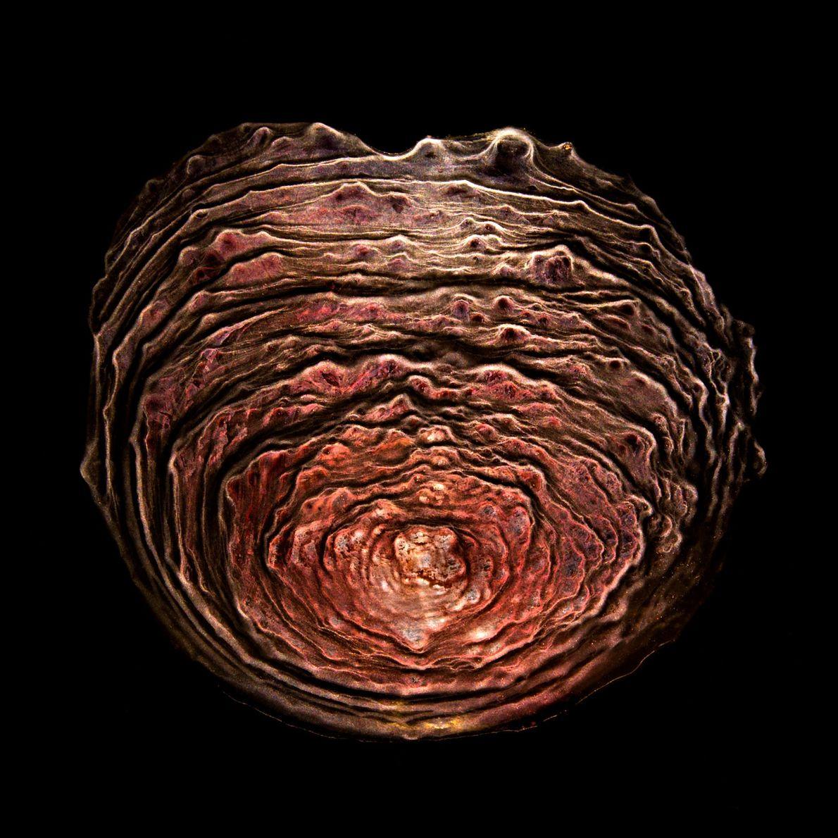 Ernie Button fotografa padrões de sedimentos que aparecem naturalmente. A parte criativa é iluminação que pode ...
