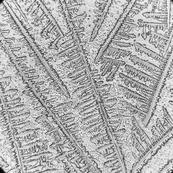 As lágrimas secas de uma tartaruga-cabeçuda apresentam um padrão único após a cristalização. Esses padrões variam ...