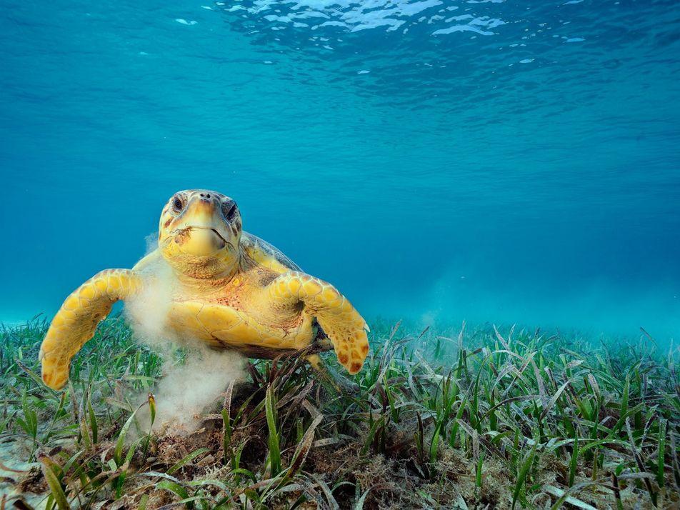 Tartarugas-marinhas podem transportar mais de 100 mil pequenos animais em seus cascos