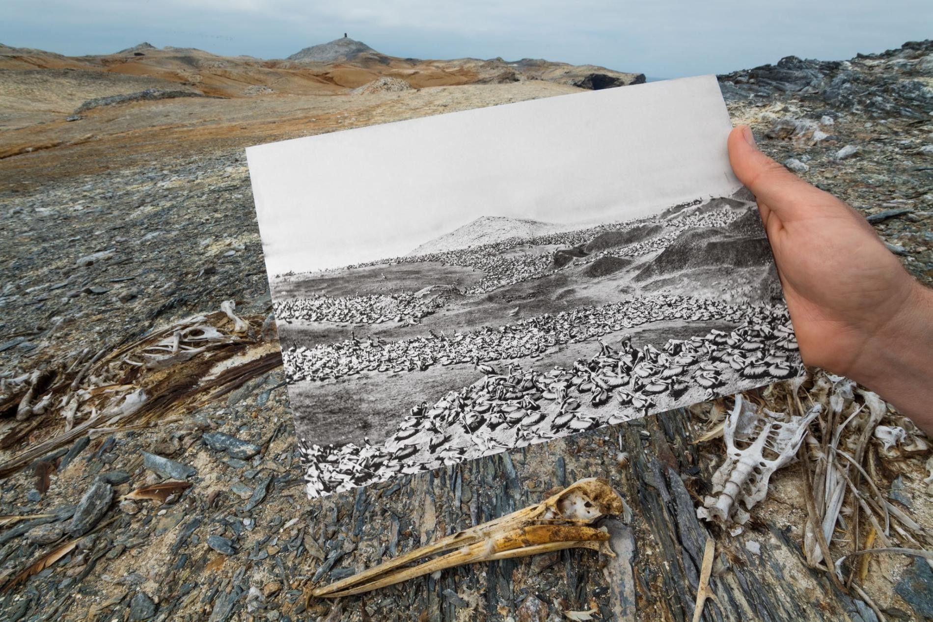 Nas Lobos de Afuera, ilhas na costa peruana, um século de perdas devido à extração de ...