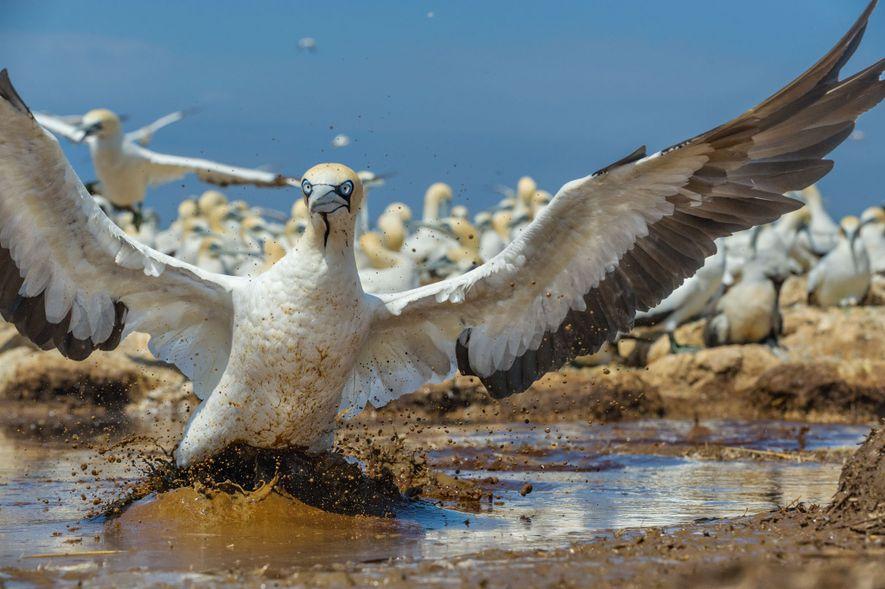 BAÍA ALGOA | ÁFRICA DO SUL | Um Parque Nacional na África do Sul assegura a ...