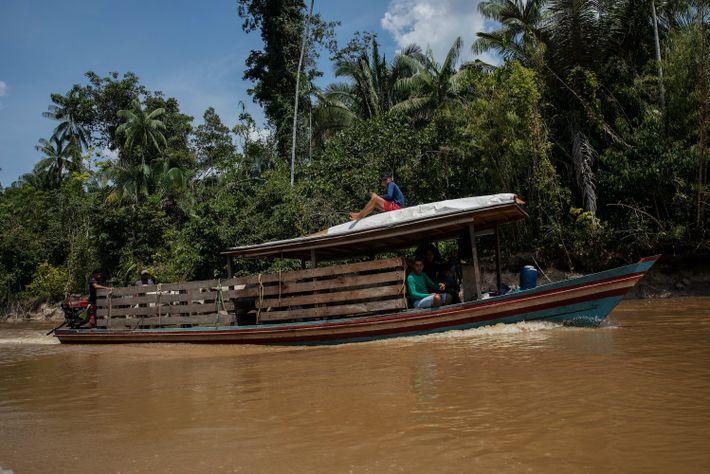 Embarcação transporta gado no rio Moa, dentro do Parque Nacional da Serra do Divisor, no Acre. Em Mâncio ...