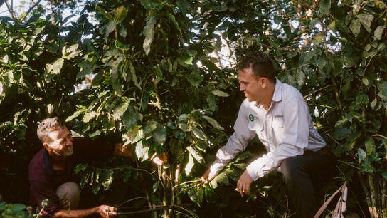 Luis e o agrônomo Fernando podam um pé de café juntos. Os dois agora são amigos ...