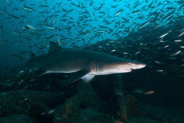 expectativa-de-vida-tubaroes