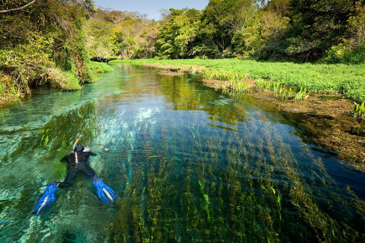 Snorkel down the Rio Sucuri for an up close encounter with plenty of fish.
