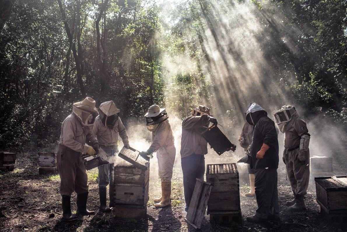 Um grupo de apicultores em Tinun, no México, cuida das colmeias no período de entressafra. As ...