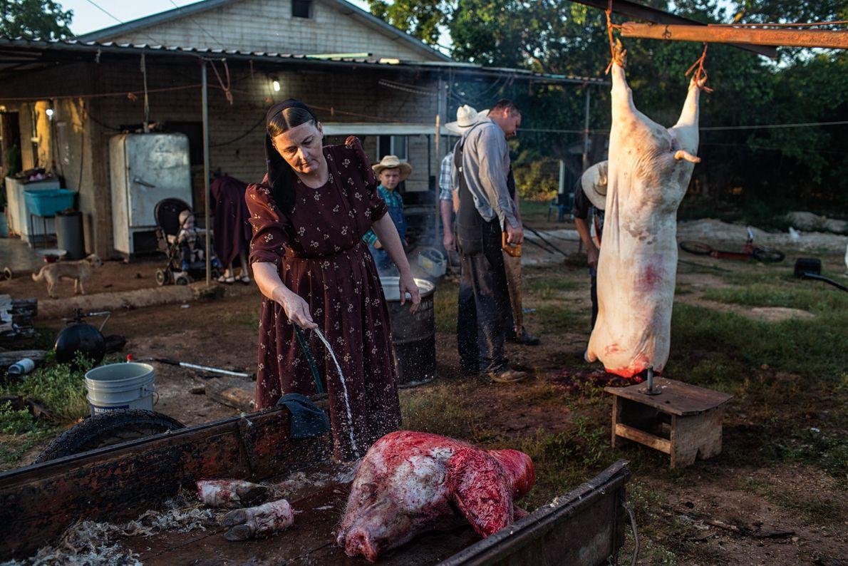 Ana Ham limpa a cabeça de um porco no Acampamento Temporário Menonita, no México. A família ...