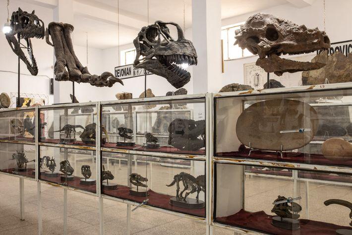 O museu de fósseis Tahiri, gerenciado por um comerciante de fósseis, abriga restos marroquinos e moldes ...