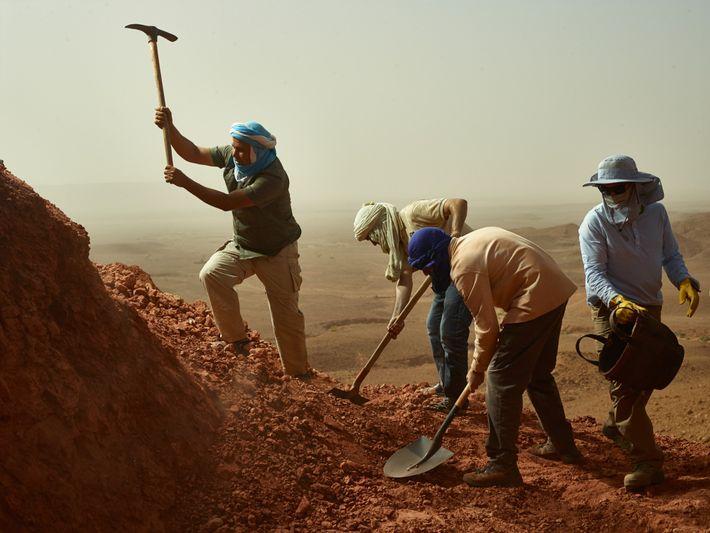 escavacao de fosseis dinossauros