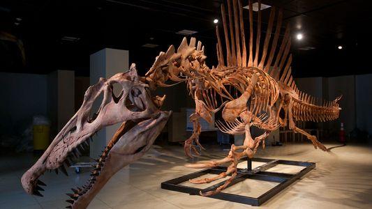 Esse feroz dinossauro 'semiaquático' pode ter sido um nadador desajeitado