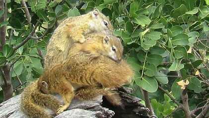 Esquilos fazem conchinha no inverno para esquentar