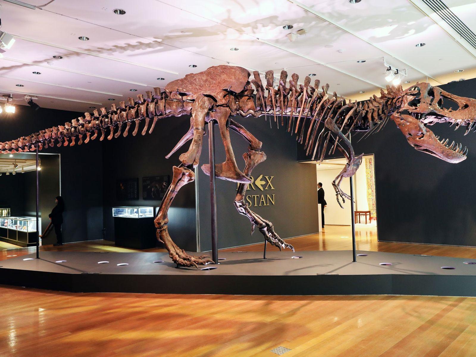 O fóssil de Tyrannosaurus rex conhecido como Stan exibido em uma galeria na casa de leilões Christie's, ...