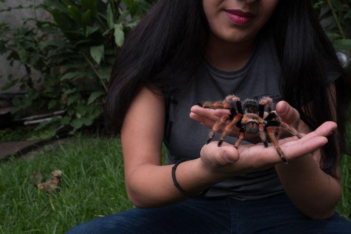 Yanei Badillo exibe sua tarântula-de-pernas-vermelhas de estimação na Cidade do México. Colecionadores buscam as espécies mais ...
