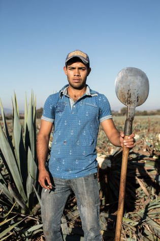 Roberto Jimenez Ramos, um jimador da Tequila Ocho em Jalisco, México.