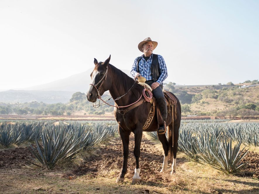 Gulliermo Sauza, proprietário da Destilaria Fortaleza, observa os campos de agave em Tequila, México.