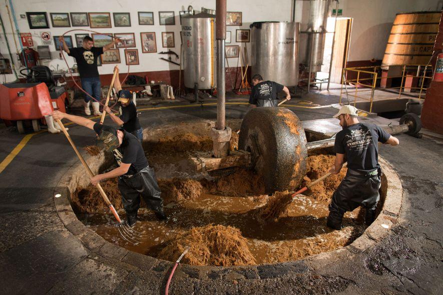 Para que libere os açúcares necessários para a produção da tequila, os funcionários esmagam as fibras ...