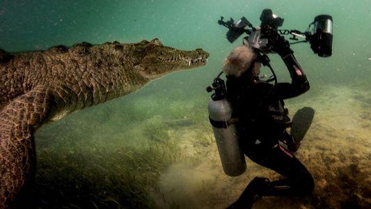 Os bastidores de um encontro com um crocodilo