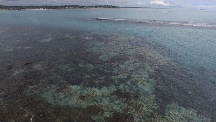 Imagens de drone mostram corais branqueados em Pernambuco