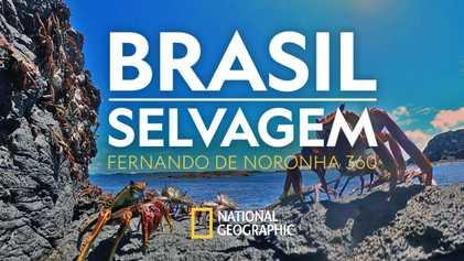 Brasil Selvagem: embarque nas belezas de Fernando de Noronha em 360