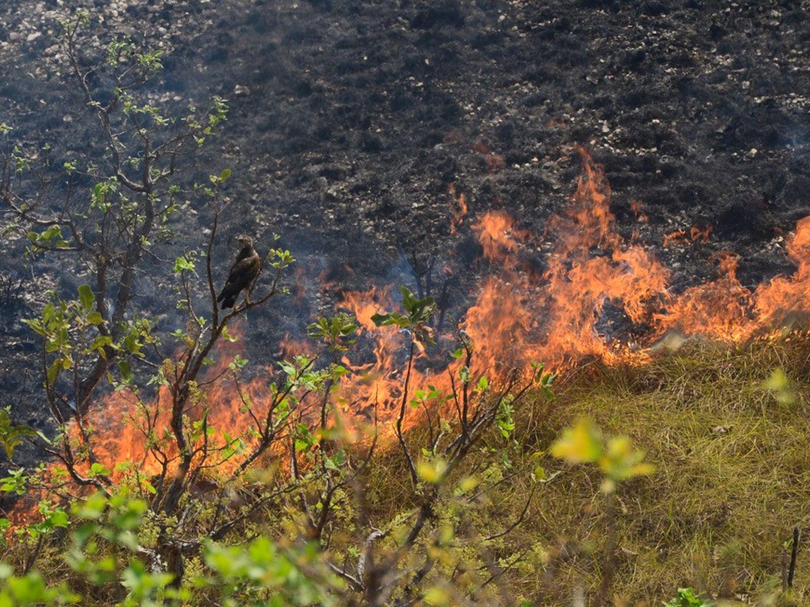incendio chapada dos guimaraes
