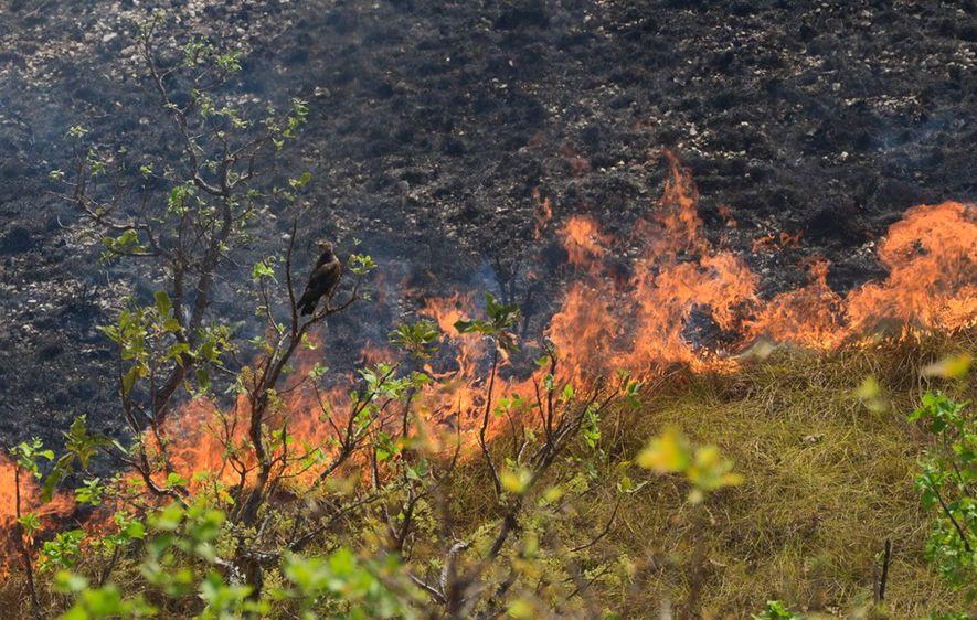 Três incêndios seguidos atingiram a região da Chapada dos Guimarães, em Mato Grosso, no mês de ...