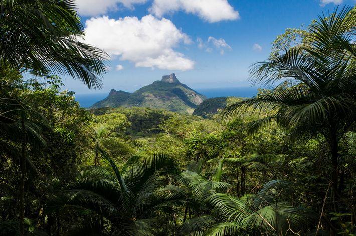 A Floresta da Tijuca, a maior floresta urbana do mundo, foi reflorestada e abriga centenas de ...