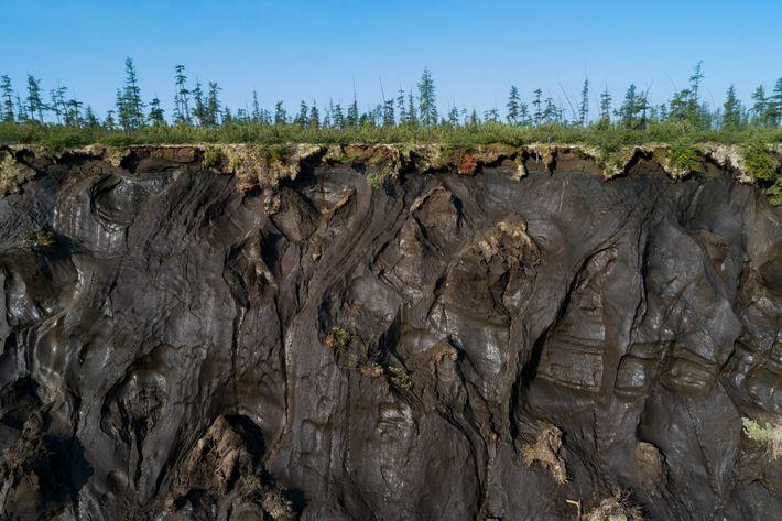 Os antigos solos do permafrost ártico, vistos aqui na parede da cratera Batagaika, contêm restos orgânicos ...