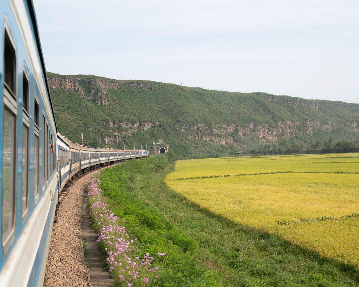 O trem para Rason corta campos verdejantes.