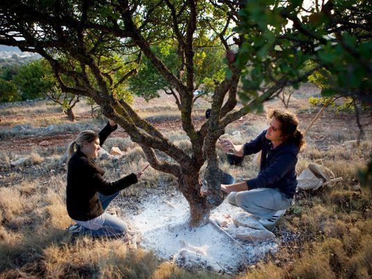 Planta com poderes curativos cresce em uma única ilha grega