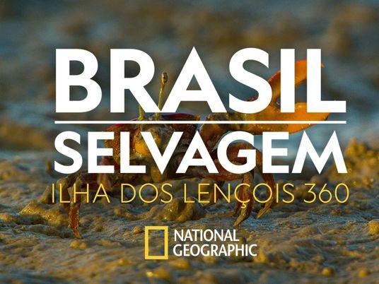 Brasil Selvagem: descubra os caranguejos chama-marés da Ilha dos Lençóis em 360