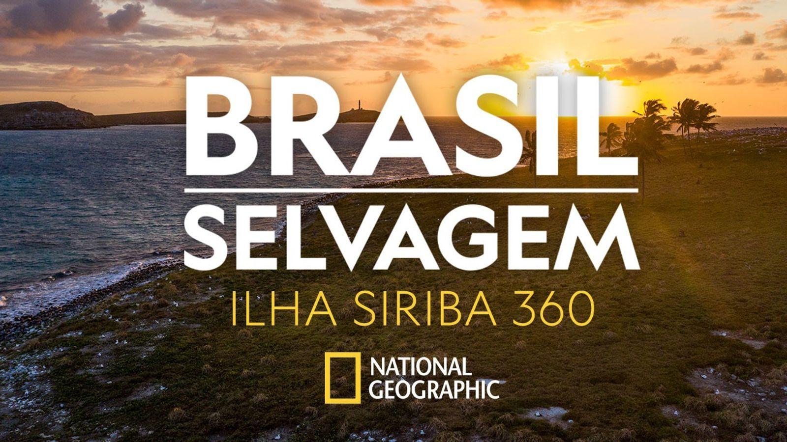 Brasil Selvagem: navegue  com os atobás pela Ilha Siriba, no arquipélago de Abrolhos, em 360